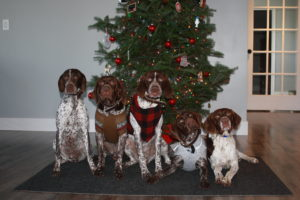 "The ""Pack"" on Christmas Day 2015. L to R: Eve, Casius, Josie, Lillie, and Jet"